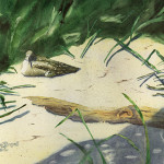 """""""Willet and Chick"""" Watercolor Painting"""