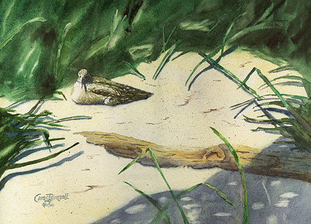 """Willet and Chick"" Watercolor Painting"