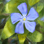 """Lavender Blue"" Watercolor Painting"